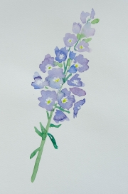 watercolor-flowers-11