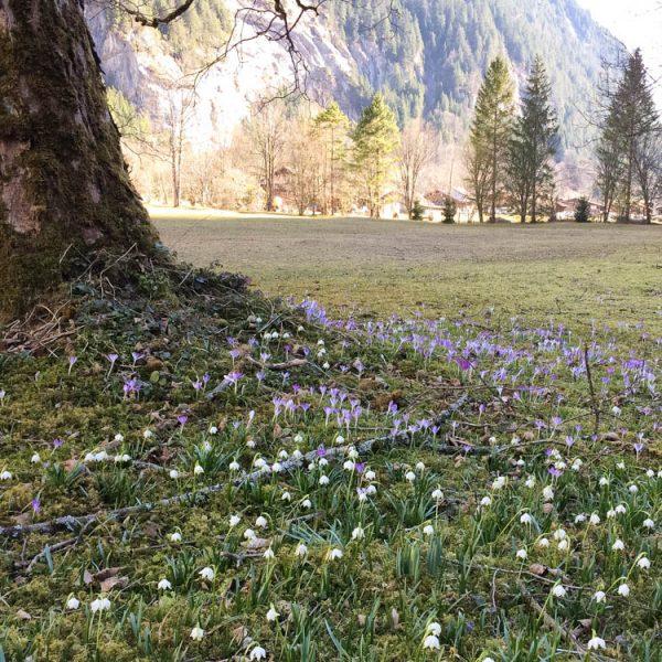 Early spring in Lauterbrunnen Valley, Switzerland