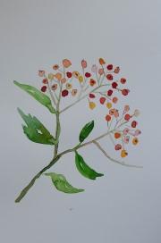watercolor-flowers-1