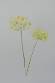 watercolor-flowers-5