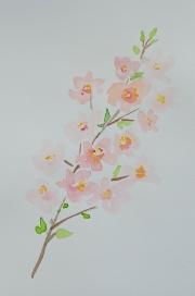 watercolor-flowers-8